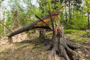 Forestor Tempête